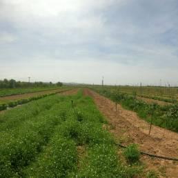 azienda agricola il Ghimbergo