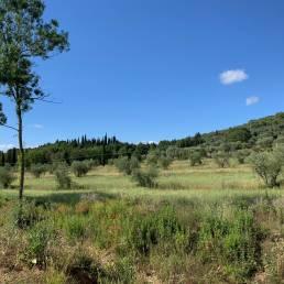 Paesaggio oliveta Operaviva
